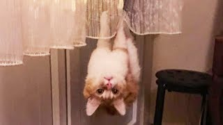 Funniest  Cats and  Dogs  Try Not To Laugh   Funny Pet Animals' Life
