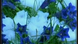 Magic Flower.flv