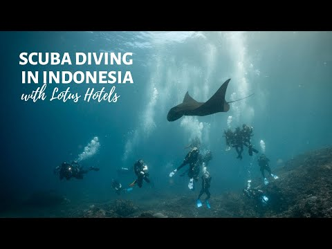 Guide To Diving In Bali 10 Best Dive Sites In Bali You Don T Want To Miss