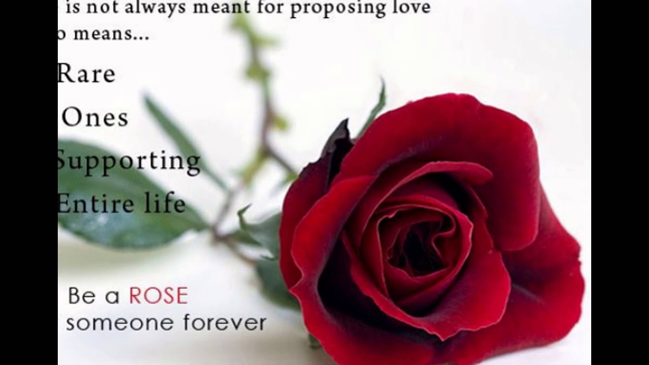 rose day 2016 Status fb whatsapp timeline cover images download