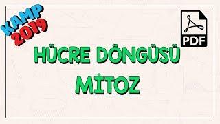 hcre-dngs-ve-mitoz-kamp2019