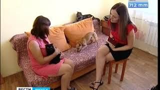 Три звезды для Шарика  В Иркутске становится всё больше гостиниц для животных