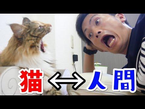 猫にもあくびは移るのか?