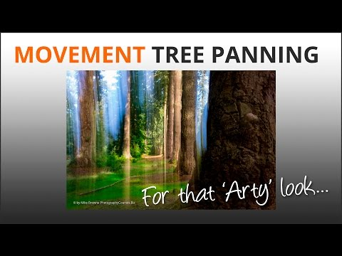 Photography Tips: Tree Panning Movement Blur