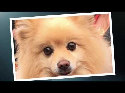 World Dog Surfing Championships 2017 Promo Trailer