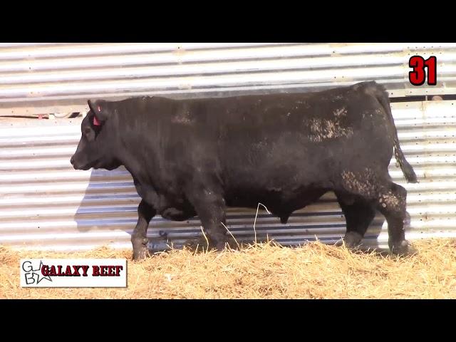 Galaxy Beef Lot 31