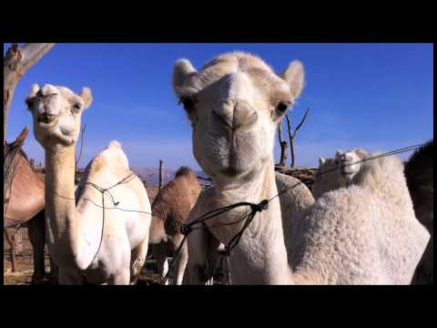 Libya: Camelmarket, the Old Ghat & Tuareg Lunch 14 02 11.mov