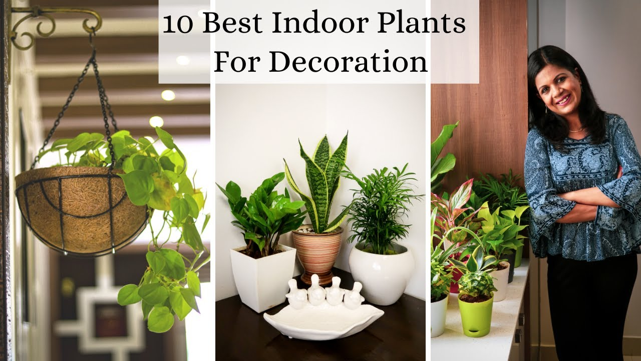 10 Best Indoor Plants For Decoration -  Low Maintenance Air purifying Houseplants