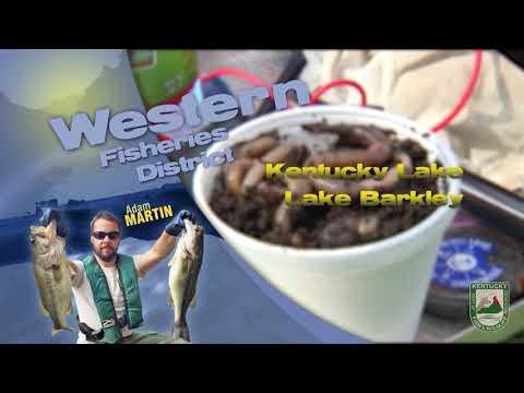 Fishing Report - July 31st, 2020
