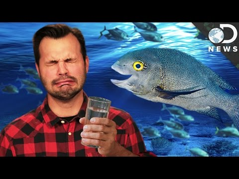Why Fish Can Drink Salt Water And We Can't