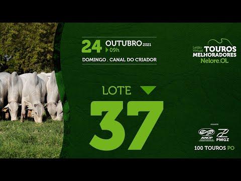 LOTE 37 - LEILÃO VIRTUAL DE TOUROS MELHORADORES  - NELORE OL - PO 2021