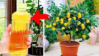Como fazer sua frutífera carregar de frutos – Novo método Super Fácil e Rápido