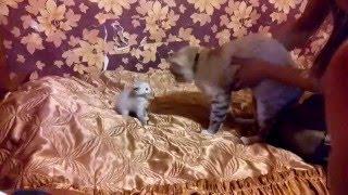 Кошка злюка