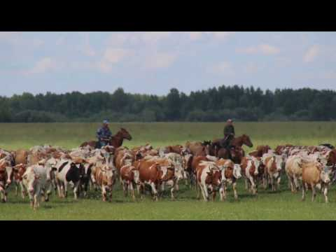 Part 4 Russia 2016 - Roo Rides East