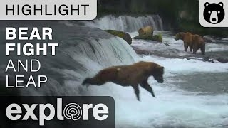 Bear Fight at Brooks Falls Then Bear Jumps Off Waterfall! - Live Cam Highlight thumbnail