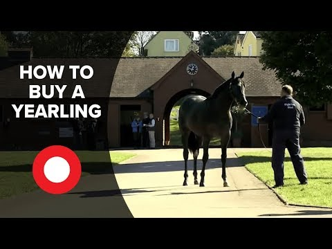 How To Buy A Yearling