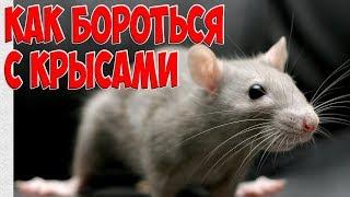Как избавиться от крыс . Супер крысоловка. How to get rid of rats and mice Super rat trap