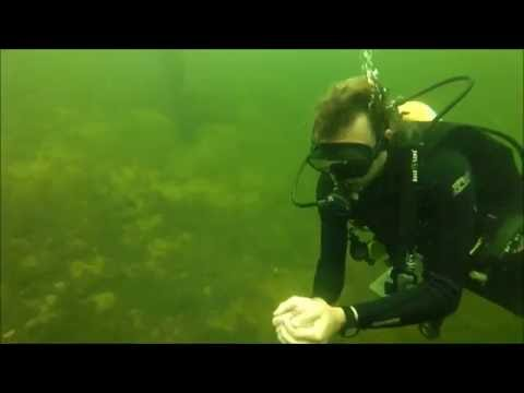 Open Water Training Dive 4