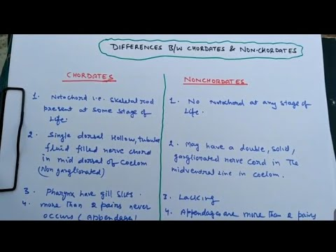 difference between chordates and non chordata