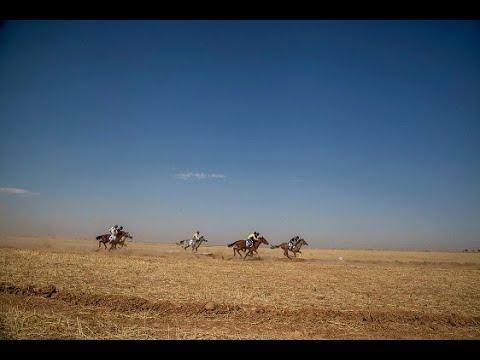 انطلاق المهرجان الثامن للخيول العربية الأصيلة في شرق سوريا  - نشر قبل 14 ساعة