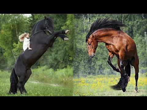 Horse SOO Cute! Cute And funny horse Videos Compilation cute moment #32