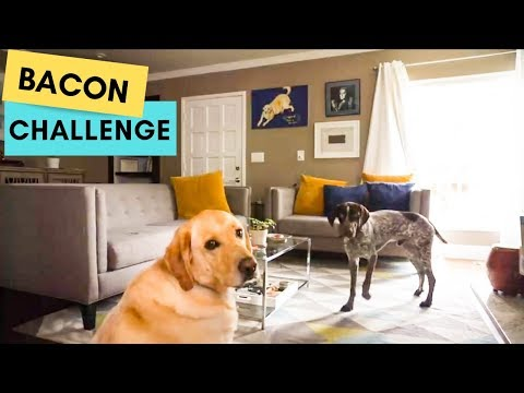 Dogs Bacon Challenge