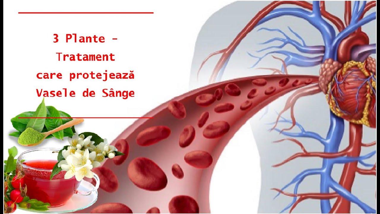 3 Plante - tratament care protejează vasele de sânge |Leacuri&Sfaturi Despre Sanatate