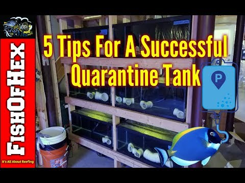 5 Tips For A Successful Quarantine Tank | Let's Fix The Problem!