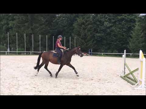 Horse for sale - Staretino -  Stakkato GOLD x Caretino - 3 years old