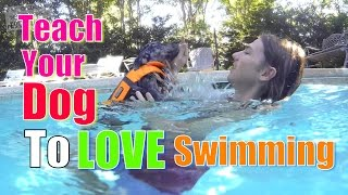 How to Teach Your Dog to Love WATER & SWIMMING