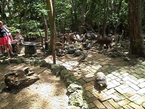 Feeding at Barbados Wildlife Reserve