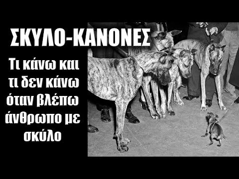 ΣΚΥΛΟ-ΚΑΝΟΝΕΣ - Τι κάνω και τι δεν κάνω όταν βλέπω άνθρωπο με σκύλο