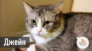 """Кошка Джейн (уже дома) - приют """"Муркоша"""""""