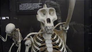 видео Зоологический музей МГУ в Москве