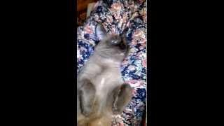 кошка спит с открытыми глазами и крехтит)))