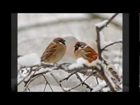 Paul Harvey ~ A Christmas Story: The Man And The Birds - YouTube