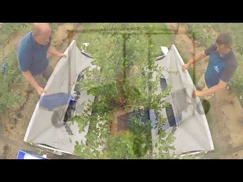 Promotional Video Blueberry harvester Harvy 200