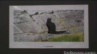 """Выставка """"Мартовские коты"""""""