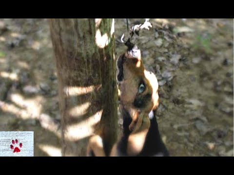 dog-found-hanging-from-slaughter-hook-on-a-tree