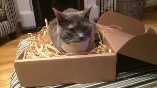 Cat plus box equals nest