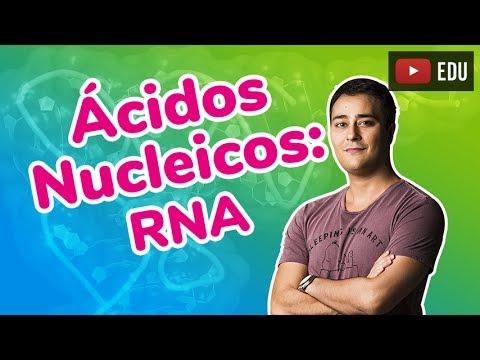 Ácidos Nucleicos - RNA - Compostos Orgânicos - Prof. Paulo Jubilut