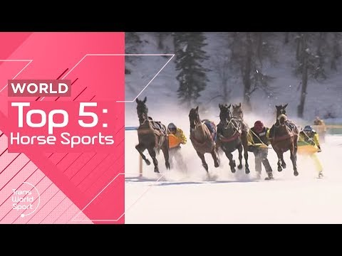 Horse Sports - Top 5