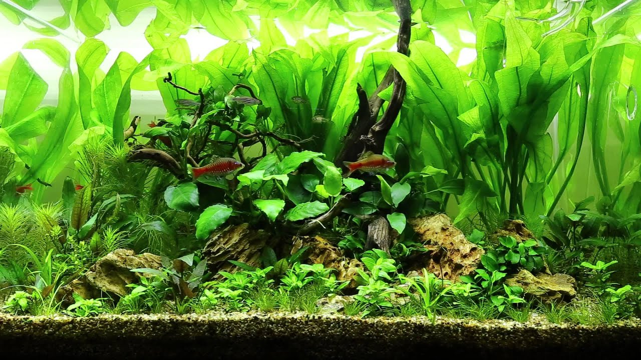 I'm back!! (65cm - Odessa's Island Aquascape) - YouTube