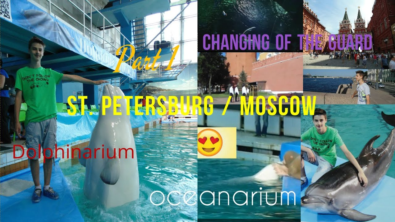 Dolphinarium in St. Petersburg: the sights of the northern capital 18