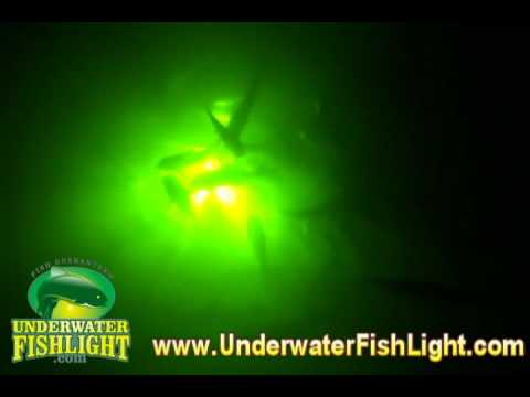 underwater fish light - happy customers & tons of fish! snook, Reel Combo