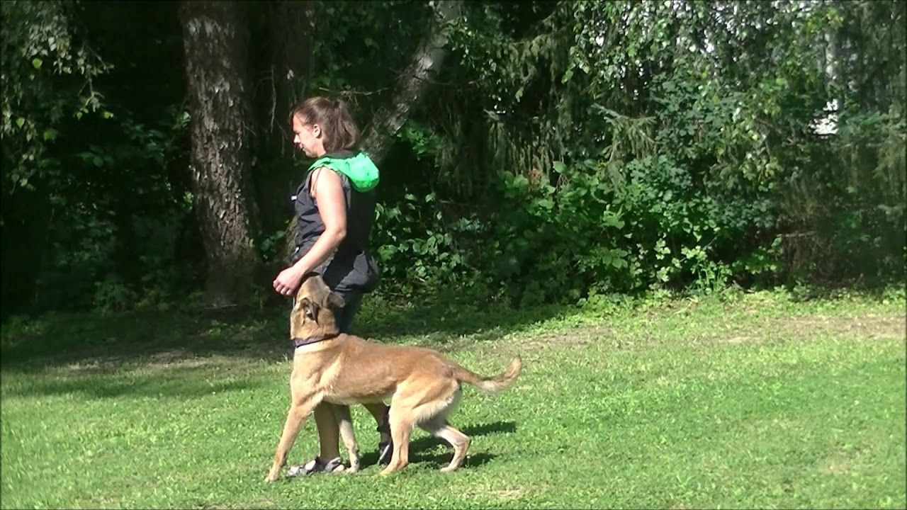 VAMOZ BOHEMIA - german shepherd kennel