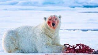 母親の愛情は海よりも深いもの。しかしそれは人間だけに限った話ではありません。今回は、12の動物たちの奇妙で美しい母性愛をご紹介します!...
