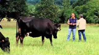 L'élevage bovin et l'agriculture biologique Bio nat'