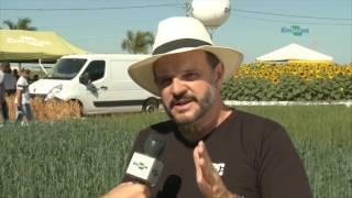 Quadro - Repórter em Campo: BRS 404: cultivar de trigo sequeiro