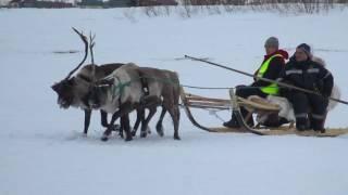 видео Свитеры с северными оленями